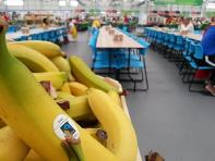 選手村の食堂でフェアトレード認証バナナが提供されている様子